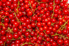 The background made of red currant berries Royalty Free Stock Images