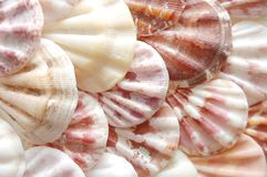 Background made with sea shells Royalty Free Stock Photo