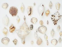 Background made from sea shells. The background is made of many sea shells. Summer concept stock photos