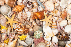 Background made of sea shells Royalty Free Stock Photography
