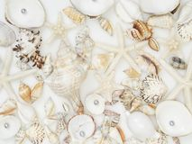 Background made from sea shells stock photography