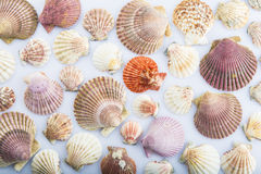 Background made of seashells Stock Images
