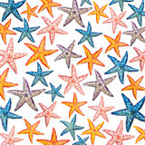 Background made of star fish Royalty Free Stock Photo