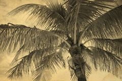 Background made with a textured palm tree Stock Photos