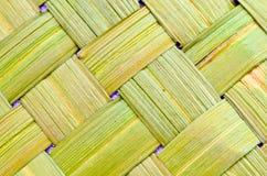 Background made from Vetiver Grass (Vetiveria ziz Stock Image