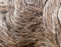 Background made of wool sheep Stock Photos