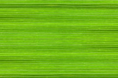 Background of manna grass leaves Stock Photography