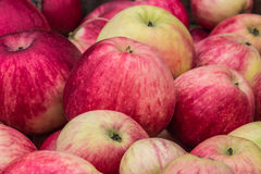 Background of many beautiful, juicy red and green apples Royalty Free Stock Image