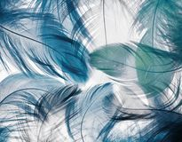 Background of the many beautiful natural bird feathers of vario Stock Photo