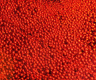 Background of many bright red bubbles. Festive background of many bright red bubbles Royalty Free Stock Photos
