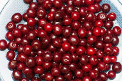 Background of many cherry berries Royalty Free Stock Image