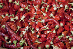 Background with many chilli peppers Royalty Free Stock Photography