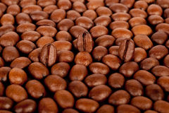 Background of many coffee beans Royalty Free Stock Photos