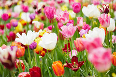 Background with many colorful flowers Stock Photo