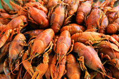 Background with many crawfishes. Background with many boiled crawfishes Royalty Free Stock Images