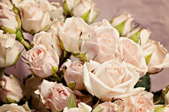 Background of the many delicate little pink roses Stock Images