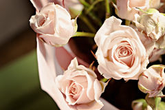 Background of the many delicate little pink roses Royalty Free Stock Image