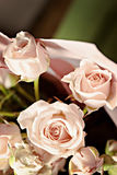 Background of the many delicate little pink roses Stock Image