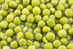 Background with many pea beans Stock Image