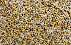 Background of many small green capers Royalty Free Stock Images