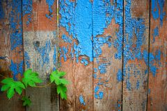 Many wooden planks and green leaves stock photos