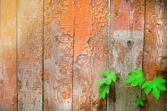Many wooden planks and green leaves royalty free stock photography