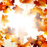 Background with maple autumn leaves. EPS 10 Stock Photo