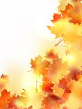 Background with maple autumn leaves. plus EPS10 Stock Photos