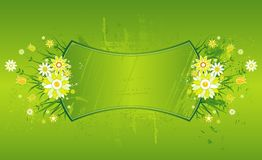 Background,marguerites, vector Royalty Free Stock Image