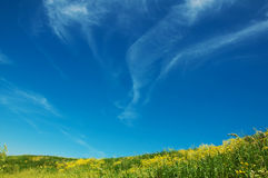 Background with meadow and sky. Bright,beauty background with meadow,blue sky and clouds.Spring.May Stock Image