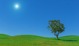 Background of meadows, the sun. sky and tree. For wallpaper. Royalty Free Stock Photography
