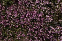 Background of purple flowers for text stock photos