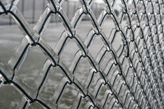 Background. Metal grid in ice. In winter, the rain and froze on the fence mesh Royalty Free Stock Photos