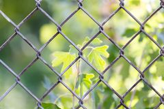 Background of the metal mesh fence.  Stock Photo