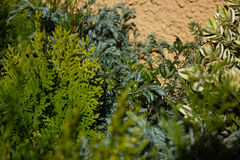 Background of mix green plants Royalty Free Stock Photos