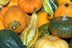 Background with mixed colorful ornamental pumpkins Royalty Free Stock Image