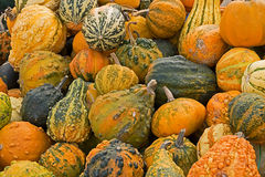 Background with mixed colorful ornamental pumpkins Stock Images