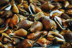 Background with Mollusc at a Fresh Market Royalty Free Stock Photo