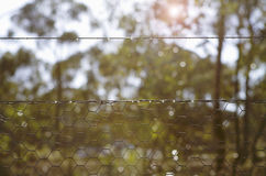 Background morning bush setting looking through chicken wire fen. Backlit morning sunshine in bush setting looking through chicken wire fence stock images