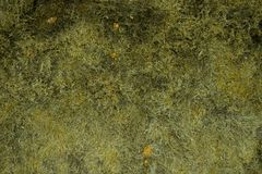 Background moss green texture Royalty Free Stock Photo