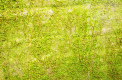 Background of moss. Spring green leaf backgrounds Stock Photo