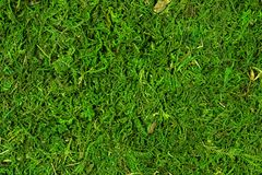 Moss texture, background with copy space stock image
