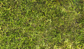 Background of moss, top view Royalty Free Stock Photography