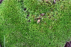 Background of moss Stock Photos