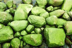 Background of mossy sea stones Stock Image