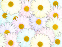 Background of motley flowers Stock Images