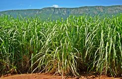 Background mountain. Part of the Lebombo mountains visible behind a huge sugar cane plantation North coast of Natal SA Royalty Free Stock Photos