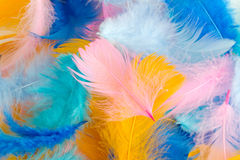 Background of multi-colored feathers Stock Photography