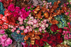 Background multi-colored roses Stock Image