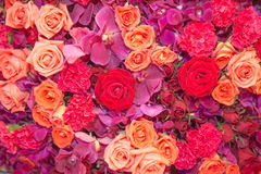Background Of Multi Colour Flowers Royalty Free Stock Images